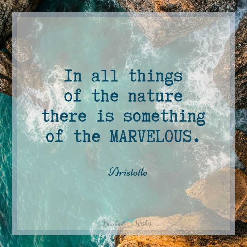 beautiful quotes about nature bluebird wishes