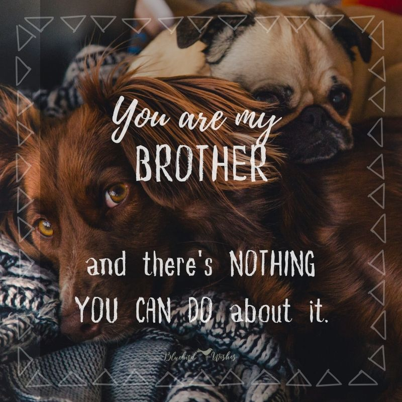 Funny texts about brothers funny quotes about brothers Funny quotes about brothers funny texts about brothers
