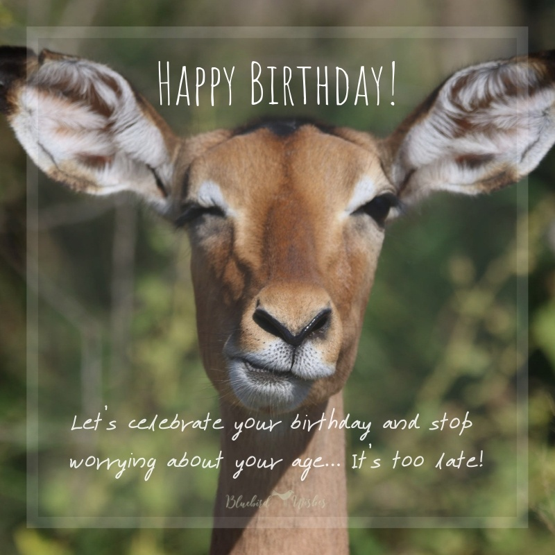 Humorous birthday greetings for friends funny birthday messages for friend Funny birthday messages for friend Humorous birthday greetings for friends