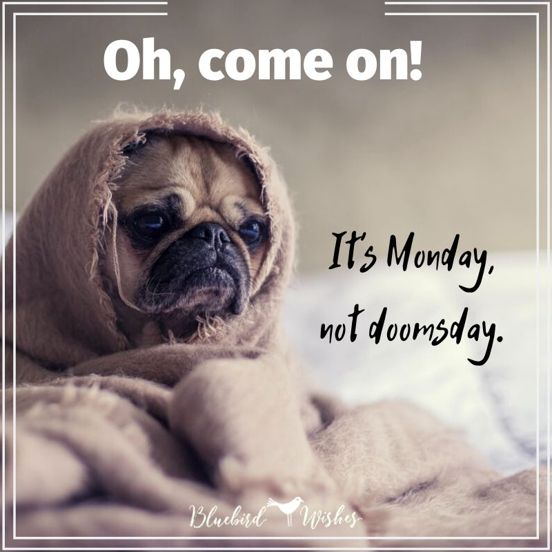 positive image about Monday positive quotes about monday Positive quotes about Monday positive image about monday