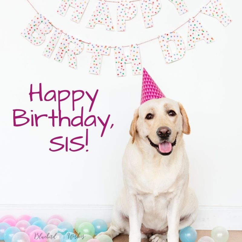 Funny Birthday Wishes For Sister Bluebird Wishes
