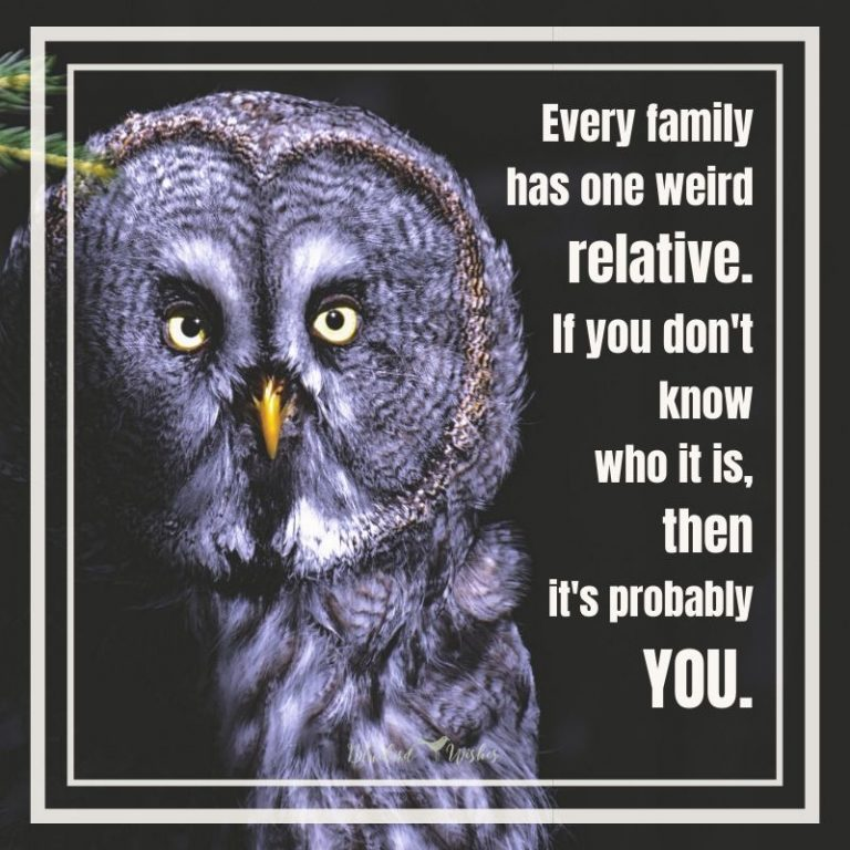 funny sayings about family